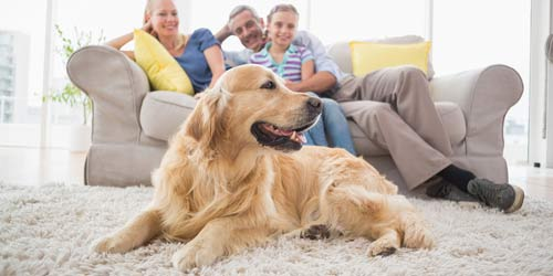 family relaxing with pet on clean carpet