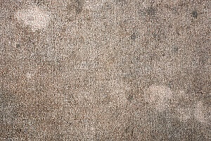 a carpet with a large buildup of mold