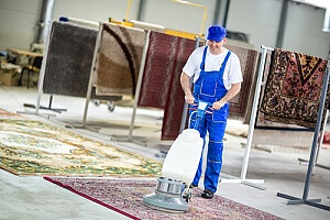 Professional carpet cleaner cleaning rugs